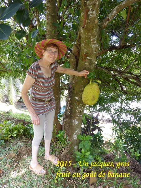 humanite-madagascar-2015-visages-paysages-fruit-jacques